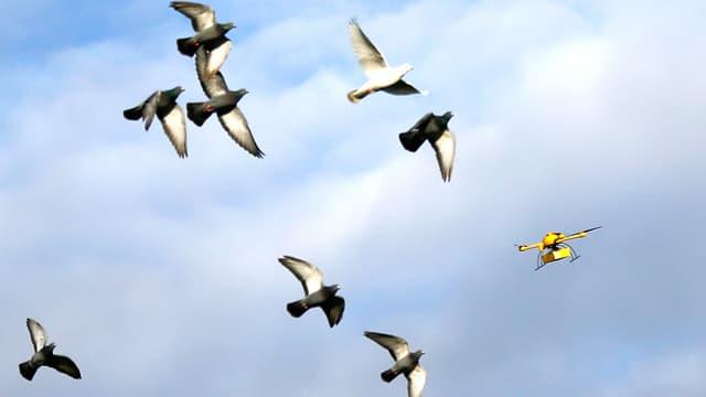 Vogelschwarm und mitten drin eine gelbe Drohne.
