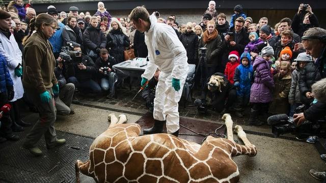 Eine tote Giraffe liegt vor zahlreichen Schaulustigen und einem Arzt, der ganz in weiss gekleidet ist.
