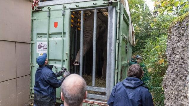 Elefant in Transportkiste, Rüssel zwischen Gitterstäben