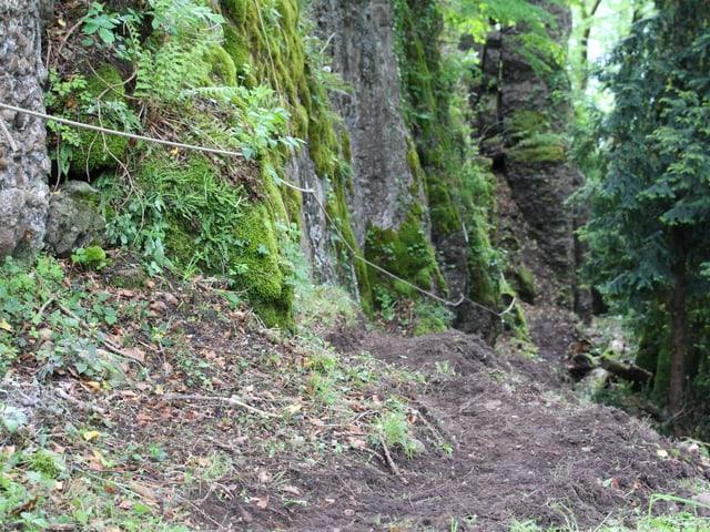 Ein schmaler Waldweg entlang einer Felswand.