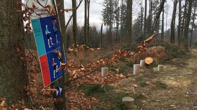 Ein Vita-Parcours-Posten im Wald
