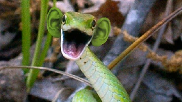 Eine grüne Schlange mit menschlichen Ohren.