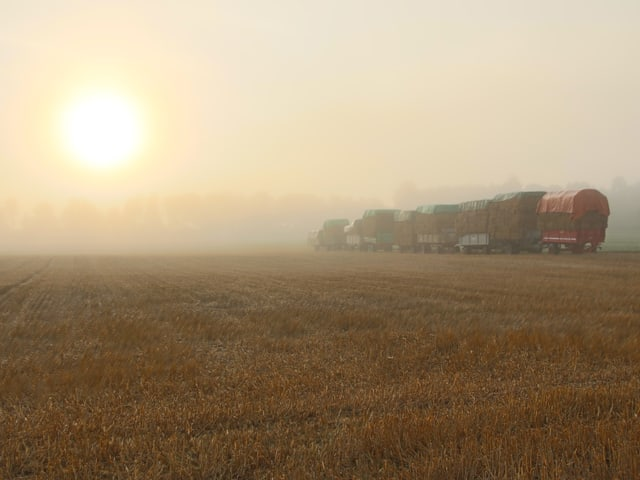 Nebel auf abgeerntetem Feld.
