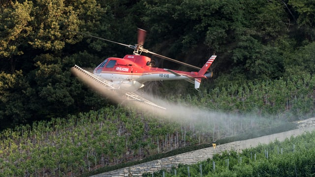 Helikopter über dem Rebberg