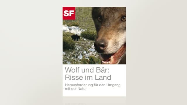 Wolf und Bär: Risse im Land