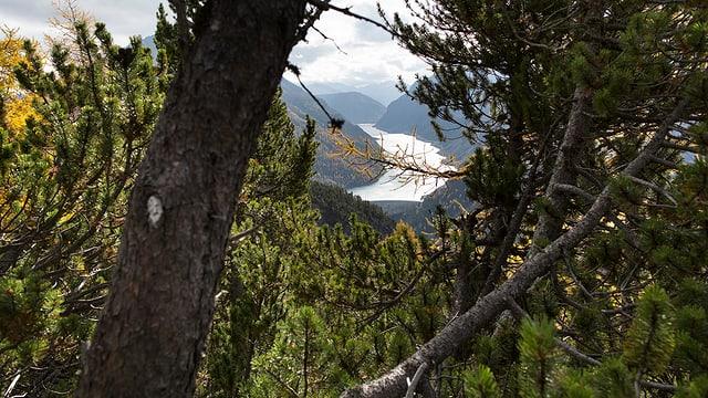 Ein Wald im Kanton Graubünden.