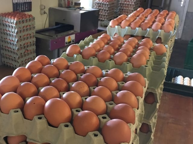 viele Eier in Kartons