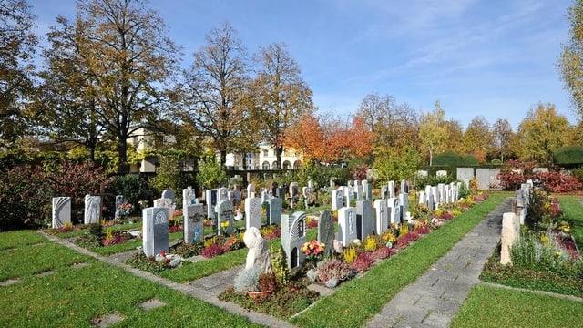 Vier Reihen Grabsteine, dazwischen Grünstreifen, im Hintergrund Bäume.