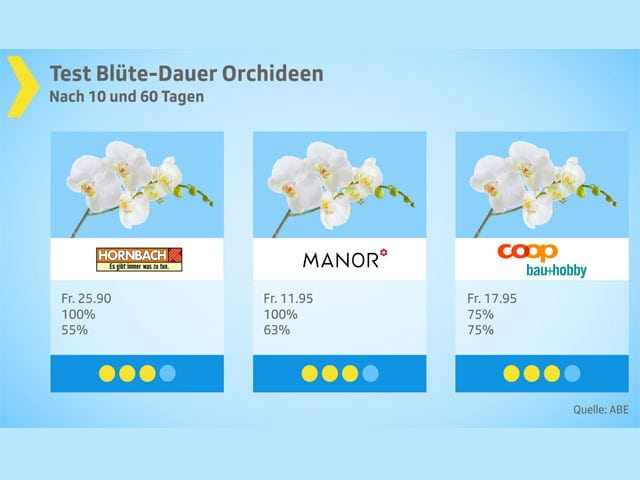 Testgrafik Orchideen.