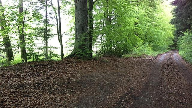 Ein Wald-Abschnitt.