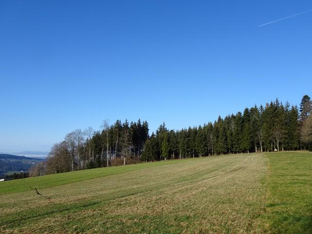 Anhöhe auf dem Stierenberg im Kanton Luzern