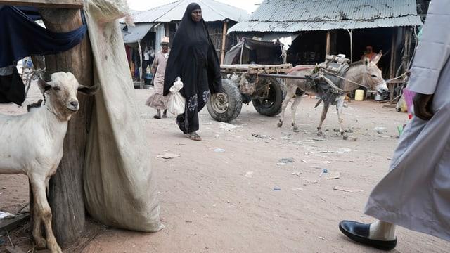 Ein Eselskarren im Flüchtlingslager Dadaab in Kenia.