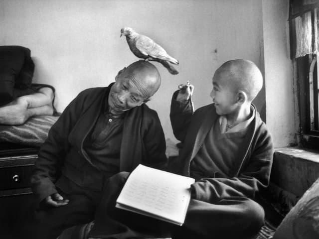 Ein älterer Mönch mit einer Taube auf dem Kopf und ein lachender junger Mönch.