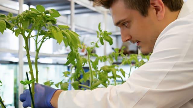 Biologe Cocioba arbeitet im Labor der Universität.