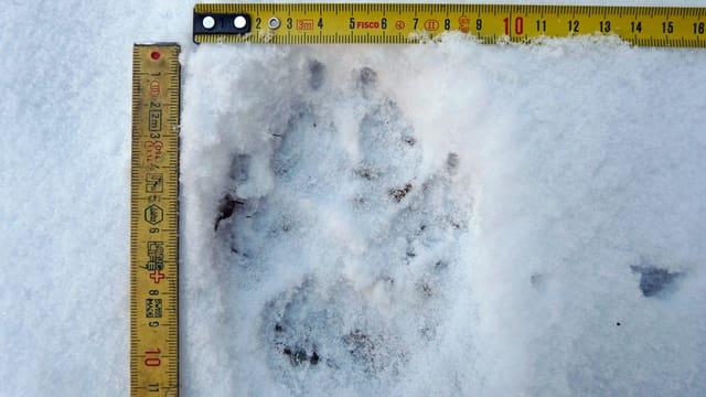Wolfstatze im Schnee