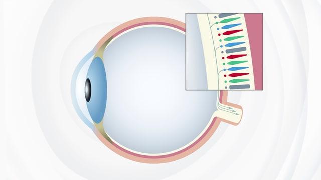 Grafik eines Auges.