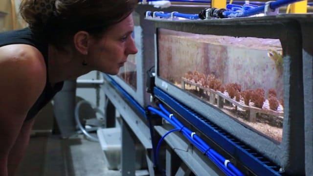 Eine Frau steht vor einem Aquarium, darin sind verschiedene Korallen.