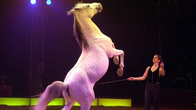 Pferdenummer in Manege