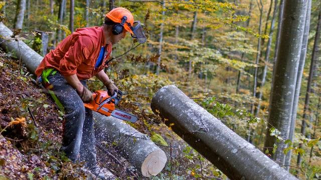 Förster zersägt einen Baum