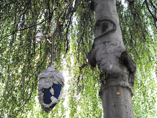 Ein Art Wespennest hängt an einem Baum