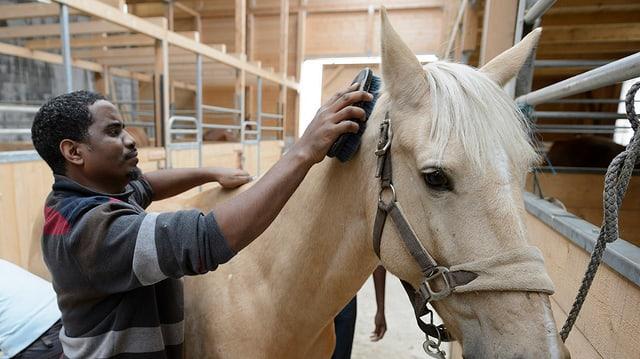 Ein Mann bürstet ein Pferd