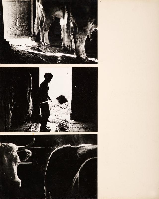 Drei Schwarz-Weiss-Fotografien aus einem Stall
