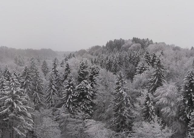 Ein Wald mit Schnee auf den Bäumen.