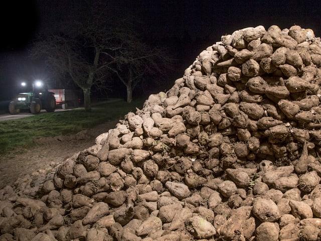 Ein Berg von Zuckerrüben, dahinter ein Traktor mit Scheinwerfern.