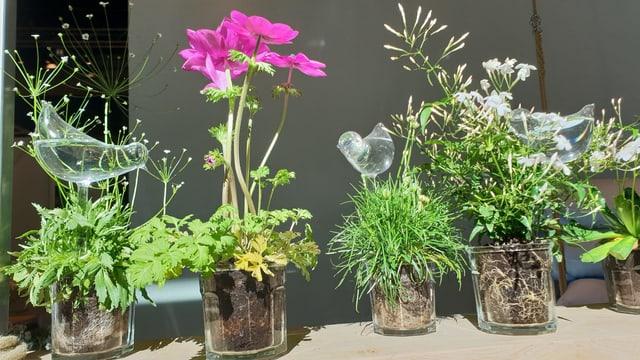 Differents flurs a la Giardina