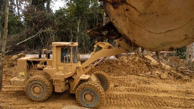 Ein Bagger stemmt einen riesigen Baumstamm in die Luft.