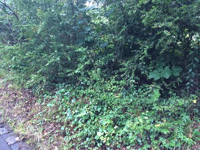 Dicht bewachsene Waldfläche