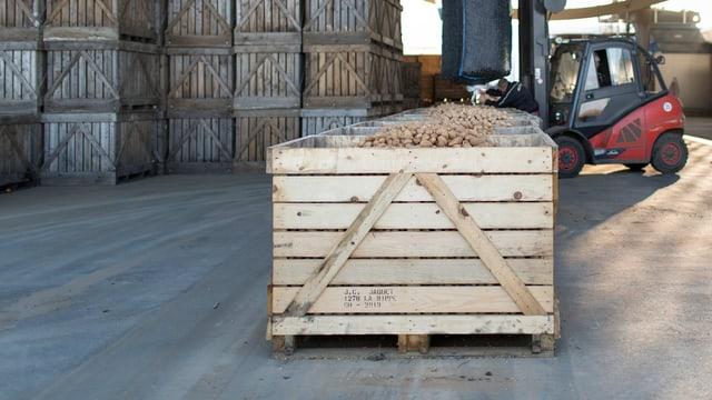Holzkiste voller Kartoffeln, im Hintergrund noch mehr Kisten, gestapelt. Hinten rechts ein Gabelstapler.
