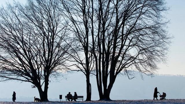 Baum im Winter ohne Blätter