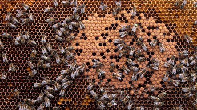 Bienenzucht ist in der Region Basel im Trend.
