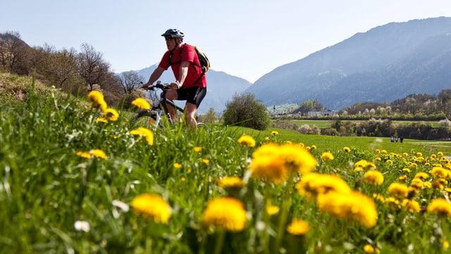 Mountainbiker und Löwenzahnwiese.