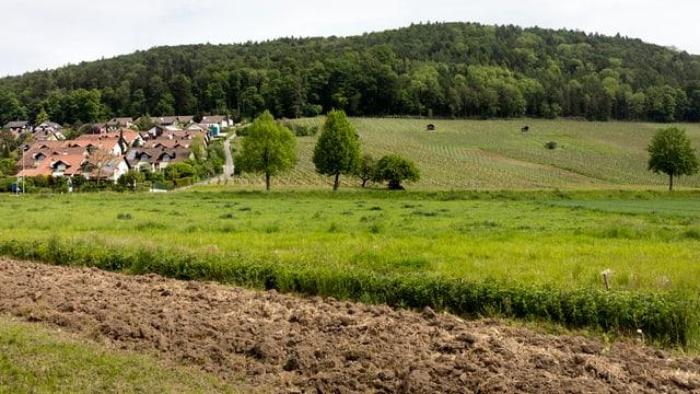 Eine Wiese und ein Acker neben einer Einfamilienhaussiedlung.