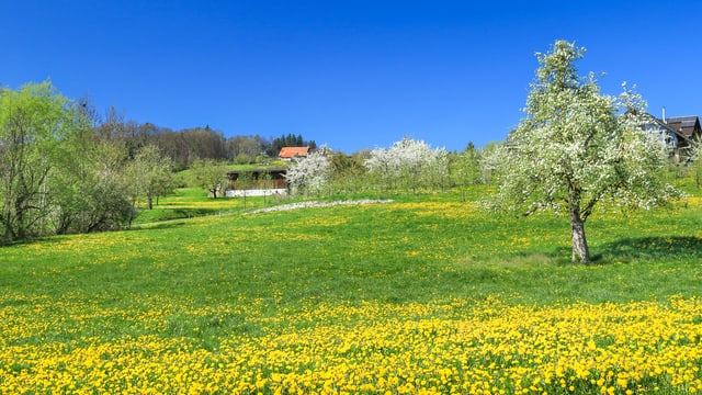Am 9. April stand bei Berg im Thurgau alles in Blüte.