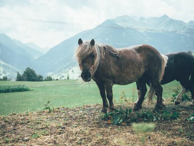 Und da steht dieses allerherzigste Pony. Awww.