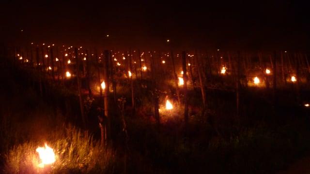 Viele Finnenkerzen brennen  zwischen den Aprikosenbäumen um die Temperatur über minus 2 Grad zu halten.