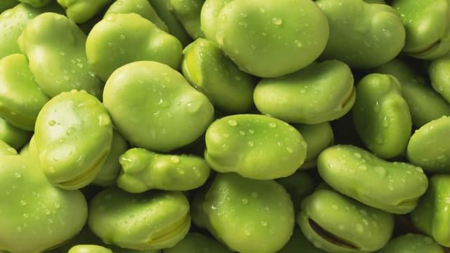 Grüne Favabohnen.