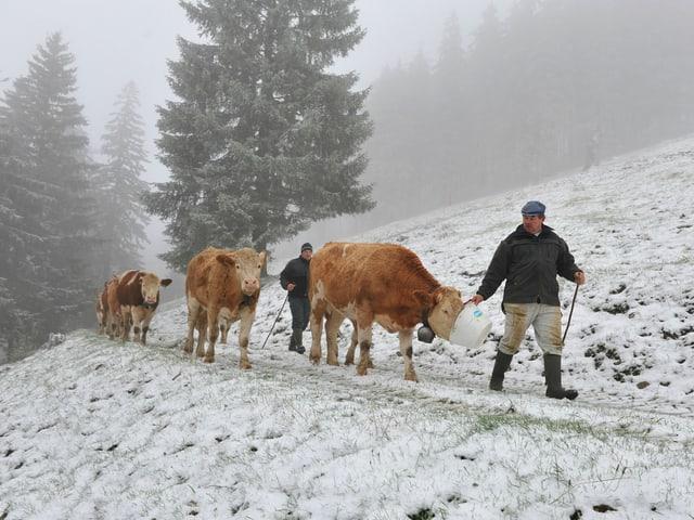 Kühe in einer verschneiten Landschaft