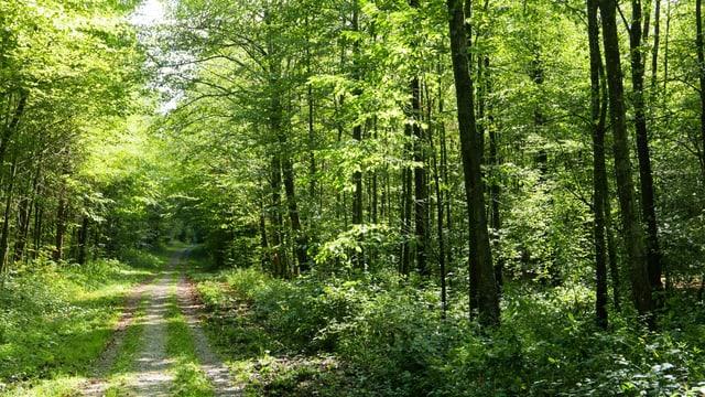 Wäberhölzli-Wald