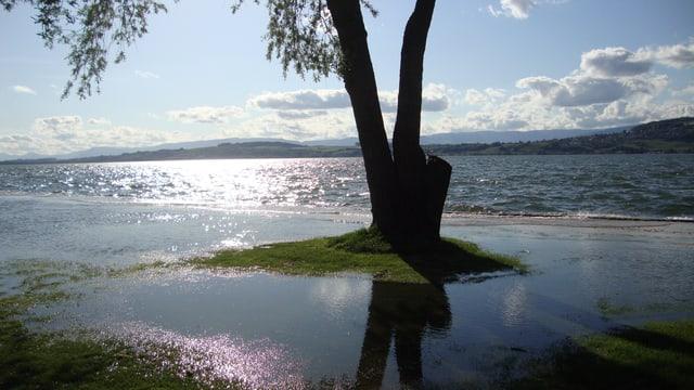 Nach dem grossen Regen von anfangs Mai hatte der Murtensee auch noch am 9. Mai Hochwasser.