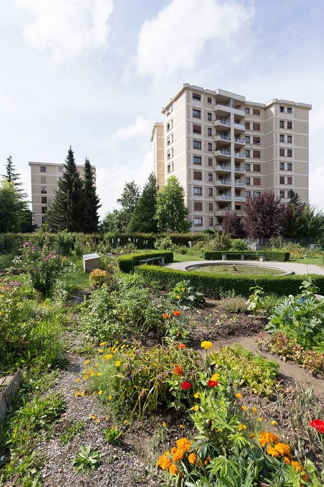 Ein Garten mit roten und gelben Blumen. Im Hintergrund steht ein Hochhaus.