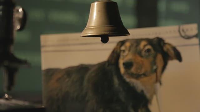 Video «Hund und Herrchen – Die Lust an der Dressur» abspielen