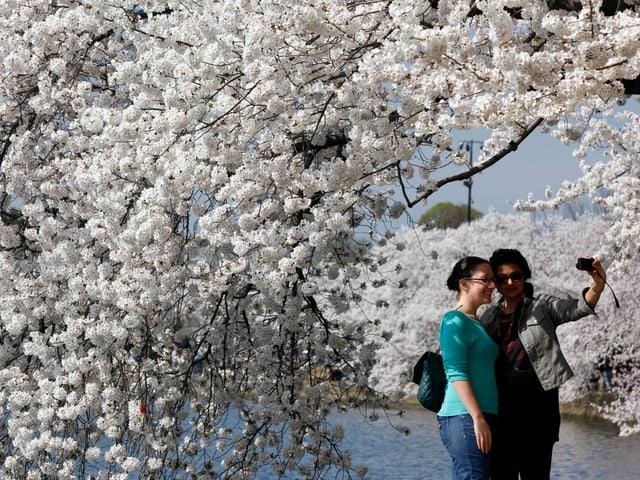 Zwei Frauen machen ein Foto unter den Kirschbäumen in Washington D.C.