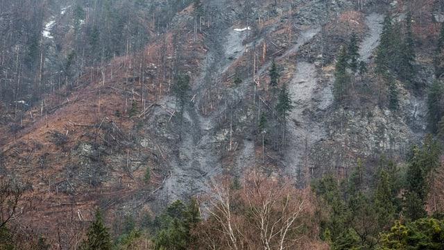 Schlamm in einem steilen Waldhang