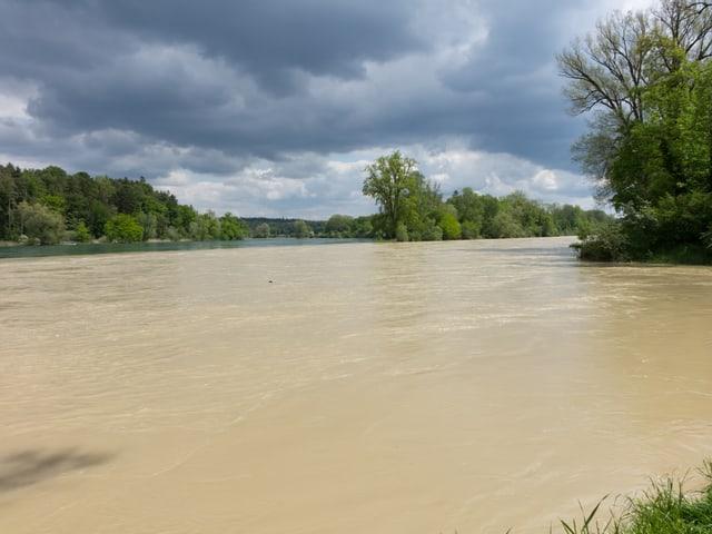 Braun verfärbtes Hochwasser wird von der thur transportiert, am Ufer viele Laubbäume.