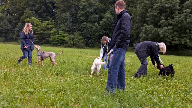 Menschen mit Hunden auf einer Wiese.