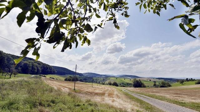 Blick auf Wiese mit Kiesweg auf der rechten Seite